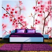 Fototapeta - Symbol Japonii - kwiaty wiśni sakura