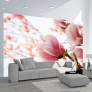 Fototapeta - Różowa magnolia