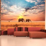 Fototapeta - Słonie na afrykańskiej sawannie