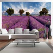 Fototapeta - Lavender field in Provence, France