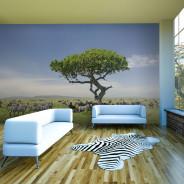 Fototapeta - Afryka: zebry w cieniu drzewa