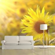 Fototapeta - Skąpane w letnim słońcu słoneczniki