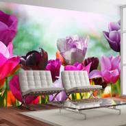 Fototapeta - Piękny wiosenny ogród, tulipany