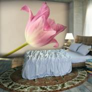 Fototapeta - Pink tulip