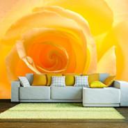 Fototapeta - Żółta róża