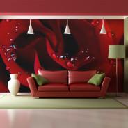 Fototapeta - Czerwona róża i krople rosy