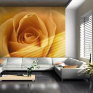 Fototapeta - Żółta róża - symbol przyjaźni