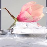 Fototapeta - Samotny kwiat magnolii