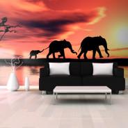Fototapeta XXL - słonie: rodzina