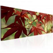 Obraz - Kolor jesieni