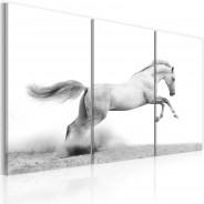 Obraz - Koń w galopie