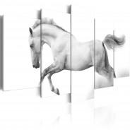 Obraz - Koń - pasja i wolność