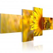 Obraz - Słoneczne słoneczniki