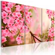 Obraz - Kwiat wiśni
