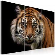 Obraz - Drapieżny tygrys
