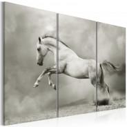 Obraz - Biały koń w ruchu