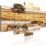 Obraz - Zebry na sawannie