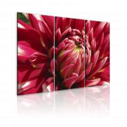 Obraz - Kwitnący ogród - dalia