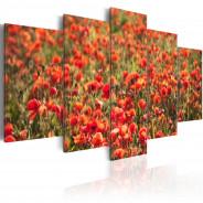 Obraz - Czerwone maki na zielonej łące