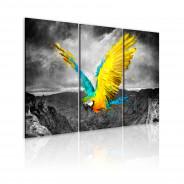 Obraz - Rajski ptak
