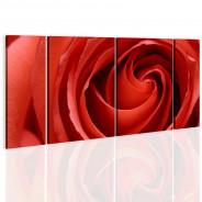 Obraz - Passionate rose