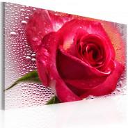 Obraz - Lady Rose