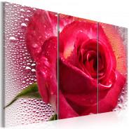 Obraz - Lady Rose - triptych