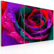 Obraz - Tęczowa róża