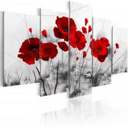 Obraz - Maki - Czerwony cud