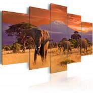 Obraz - Afryka: słonie