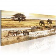 Obraz - Afryka: przy wodopoju