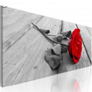 Obraz - Karminowa róża