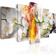 Obraz - Orchidea i kolory