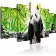 Obraz - Słodka mała panda