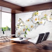 Fototapeta - Miejska orchidea