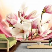 Fototapeta - Magnolia w promieniach