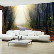 Fototapeta - Droga przez las